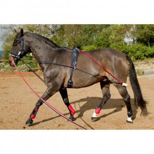 John Whitaker Training System