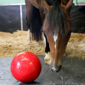 Likit Snak-A-Ball Red