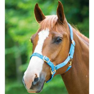 Shires Adjustable Headcollar Baby Blue