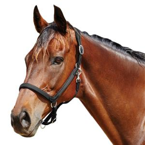 Collegiate ComFiTec Leather Headcollar Black