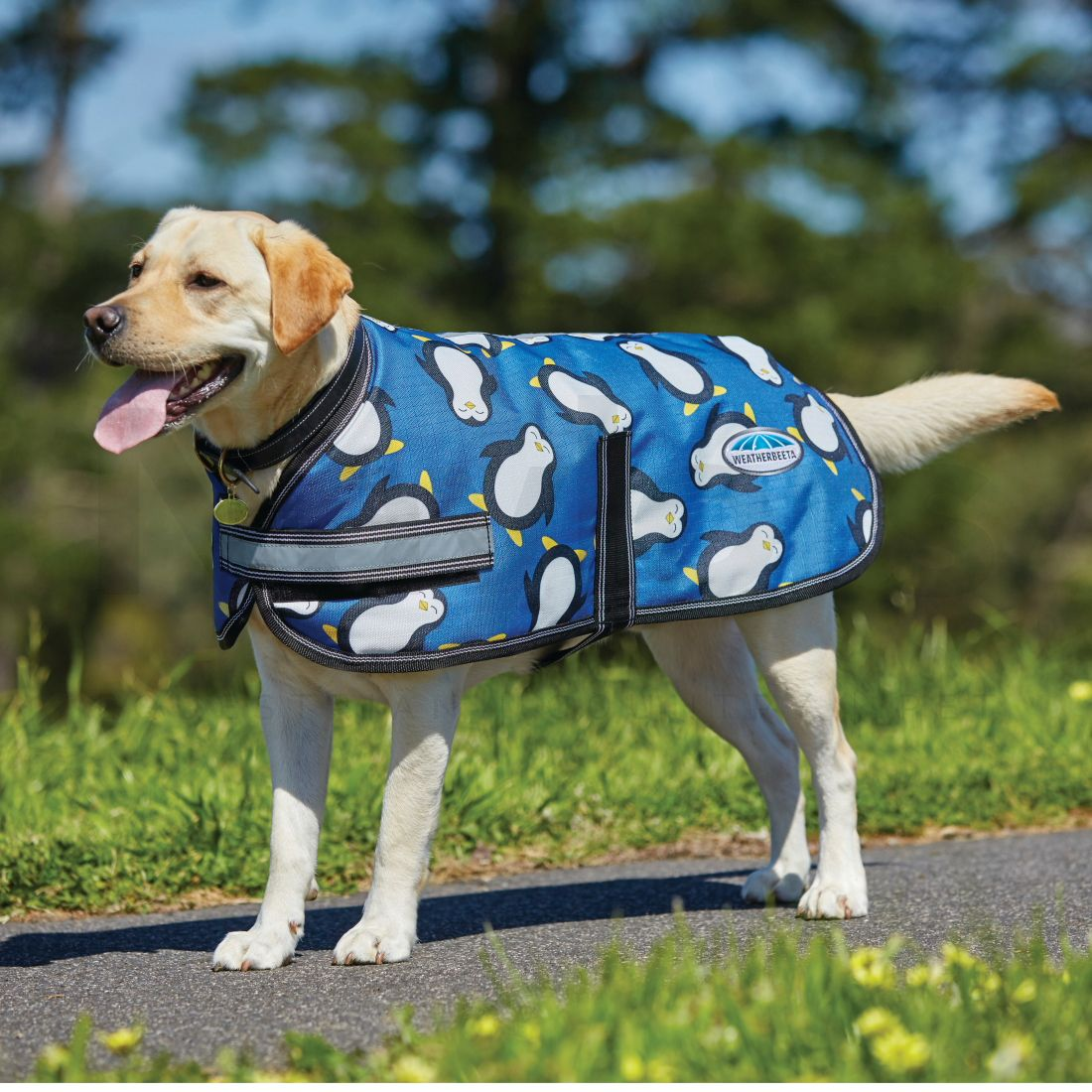 Weatherbeeta Parka 1200d Dog Coat Penguin Naylors Com